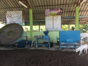 Many farmers are already using chicken manure as fertilizer for their rice crops to further improve the crop and soil quality. The community rice centre provides the required equipment/machineries to process raw chicken manure into a useable form.